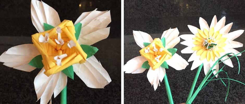 Daffodil Stage 4